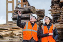 Cut trees and workers Stock Image