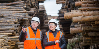 Cut trees and workers stock images