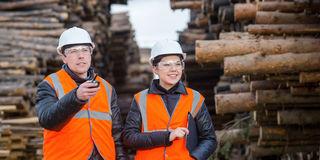 Cut trees and workers Royalty Free Stock Photos