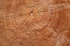 Cut trunk Royalty Free Stock Images