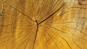 A cut of trunk tree with cracks Stock Photos