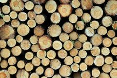 Cut trunks background. Cut pine trunks - timber industry Royalty Free Stock Photo