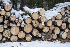 The cut trunks of trees lie under snow. winter logging.  firewood. Royalty Free Stock Photos