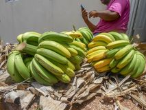 Cut-up Bunch of Bananas On Dry Trash royalty free stock image