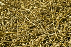 Cut wheat straw pile pattern. Royalty Free Stock Images