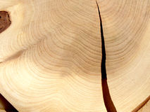 Cut of wood. Close up. Section of a trunk of a juniper with a split Stock Photo