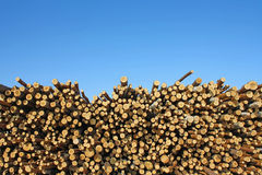 The cut wood. Against the blue sky Stock Photo