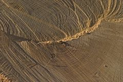 Cut Wood. Cross section of a tree royalty free stock photo