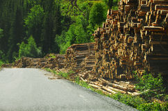 Cut Wood. Piles of wood logs waiting to be transported Royalty Free Stock Image