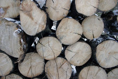 Cut wood Stock Photo