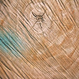 Cut of wood background Stock Image
