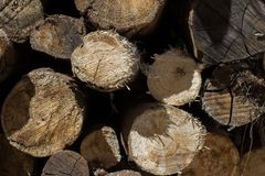 Cut wood stock image