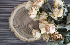 The cut wood with dried roses; dry roses on a cut tree. Vintage decoration Royalty Free Stock Photos