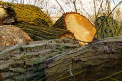 Cut wood Royalty Free Stock Photo