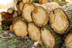 Cut wood Royalty Free Stock Images