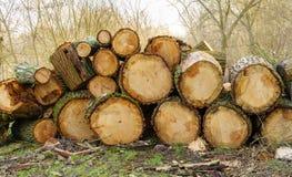 Cut wood Royalty Free Stock Image
