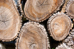 Cut wood logs background Royalty Free Stock Photo