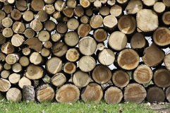 Cut Wood Logs Royalty Free Stock Photography