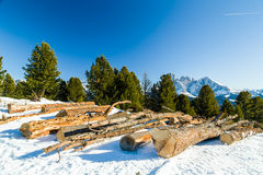 Cut wood logs in front of a panorama of snow-capped peaks Stock Photography