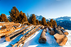 Cut wood logs in front of a panorama of snow-capped peaks. Sawn tree trunks in the snow in front of a panorama of snowy peaks on a bright sunny day in winter in Stock Photo