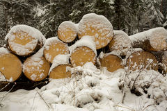 Cut Wood Logs in Snow Stock Photo