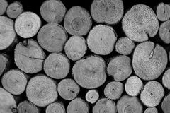 Cut wood logs stacked Stock Image
