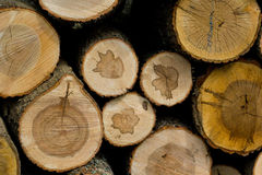 Cut wood logs stacked in a pile Royalty Free Stock Photography