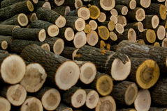 Cut wood logs stacked in a pile Royalty Free Stock Images