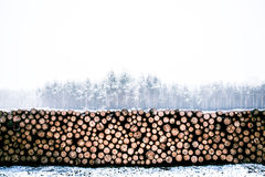 Cut Wood on Pavement Covered With Snow Royalty Free Stock Photos