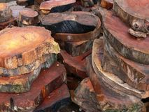 Cut wood rounds. Stacks of cut wood rounds from a tree Royalty Free Stock Images