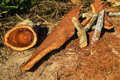Cut wood in rural,Thailand. Cutting piece of wood in countryside Royalty Free Stock Photography