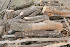 Cut wood stump log Royalty Free Stock Image