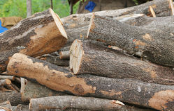 Cut wood stump log Royalty Free Stock Photos