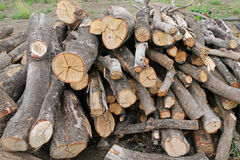 Cut wood stump log Stock Image