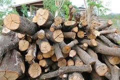 Cut wood stump log Stock Photos