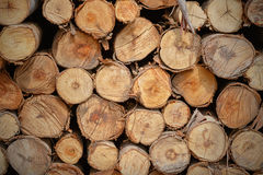 Cut wood stump log texture Stock Image