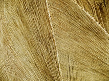 Cut wood texture Stock Image