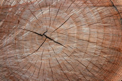 The cut wood with the texture. Stock Images