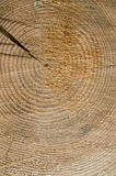 Cut wood texture. Fragment of cut wood broken from left side Royalty Free Stock Photos
