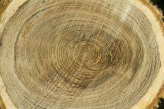 Cut wood texture. With circle close-up Stock Photography