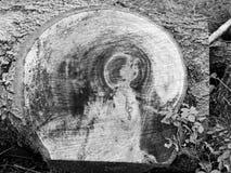 Cut wood texture of oak tree / mystic vision Stock Photos