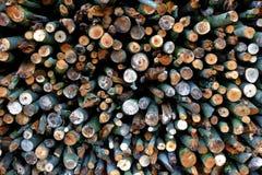 Cut wood texture Stock Image