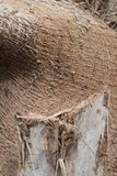 Wood Tree Trunk. Cut of a wood of tree trunk profile texture Royalty Free Stock Image