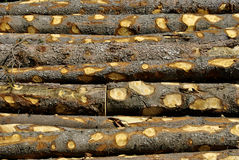 Cut wooden Stock Photography