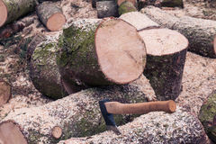 Cut wooden logs ready for split by axe Stock Photo