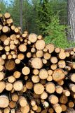 Cut Wooden Logs Stacked in Forest Stock Photo