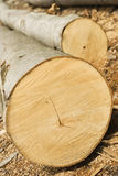 Cut wooden tree Royalty Free Stock Photo
