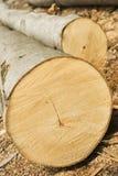 Cut wooden tree royalty free stock photo