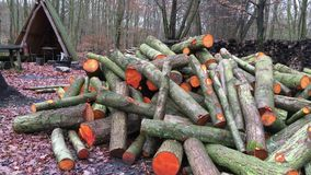 Cut Woods in Forest stock footage