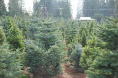 Cut your own christmas tree lot Stock Photos